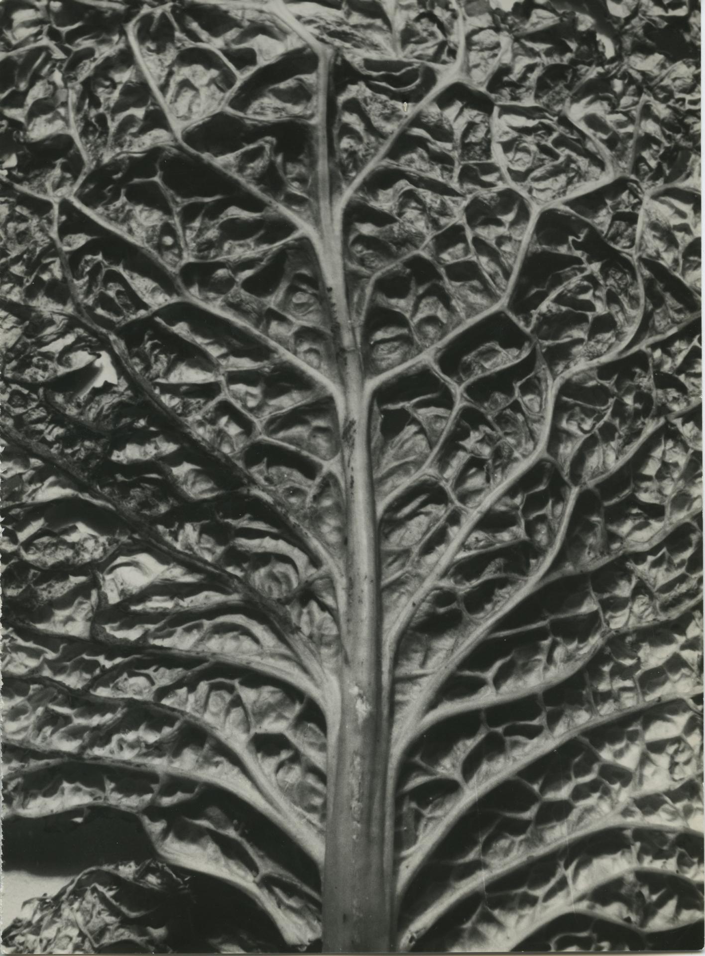 Wiesław Wojczulanis, Gotyk, 1962/1986, odbitka żelatynowo-srebrowa, kolekcja Muzeum Sztuki w Łodzi
