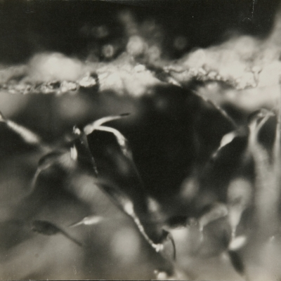 """Zbigniew Dłubak, """"Kids dream about birds"""", 1948, black-and-white photograph, from the collection of Muzeum Sztuki in Łódź: A blurred, black-and-white photograph shows a close-up of the structure, probably of plants, creating an abstract overtone of the whole. The composition fills the entire photograph, the division into foreground and background is partially blurred."""