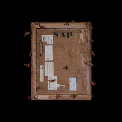 """Jasmina Cibic, """"Artyści rewolucyjni (Maria Nicz-Borowiak: Martwa natura (1928), nr inw.: MS/SN/M/38)"""", 2021, 100 cm x 80 cm, druk chromogeniczny, dzięki uprzejmości artystki: Seria """"Artyści rewolucyjni"""" prezentuje rewersy obrazów. Wyraźnie oświetlony tył dzieła usytuowany został na ciemnym tle. Ćmy oraz inne owady zostały umiejscowione na powierzchni obrazu. Liczne naklejki ulokowane na odwrocie stanowią zapis czasu, ukazując wszystkie wystawy, po których podróżowała praca."""