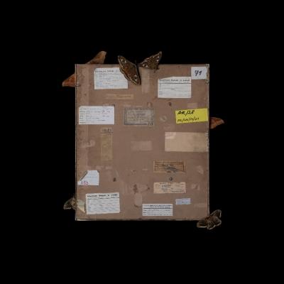 """Jasmina Cibic, """"Artyści rewolucyjni (Max Ernst: Słońce i las (1928) nr inw.: MS/SN/M/21)"""", 2021, 100 cm x 80 cm, druk chromogeniczny, dzięki uprzejmości artystki: Seria """"Artyści rewolucyjni"""" prezentuje rewersy obrazów. Wyraźnie oświetlony tył dzieła usytuowany został na ciemnym tle. Ćmy oraz inne owady zostały umiejscowione na powierzchni obrazu. Liczne naklejki ulokowane na odwrocie stanowią zapis czasu, ukazując wszystkie wystawy, po których podróżowała praca."""