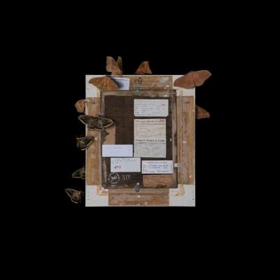 """Jasmina Cibic, """"Artyści rewolucyjni (Sophie Tauber-Arp: Kompozycja (1931), nr inw: MS/SN/RYS/6)"""", 2021, 100 cm x 80 cm, druk chromogeniczny, dzięki uprzejmości artystki: Seria """"Artyści rewolucyjni"""" prezentuje rewersy obrazów. Wyraźnie oświetlony tył dzieła usytuowany został na ciemnym tle. Ćmy oraz inne owady zostały umiejscowione na powierzchni obrazu. Liczne naklejki ulokowane na odwrocie stanowią zapis czasu, ukazując wszystkie wystawy, po których podróżowała praca."""