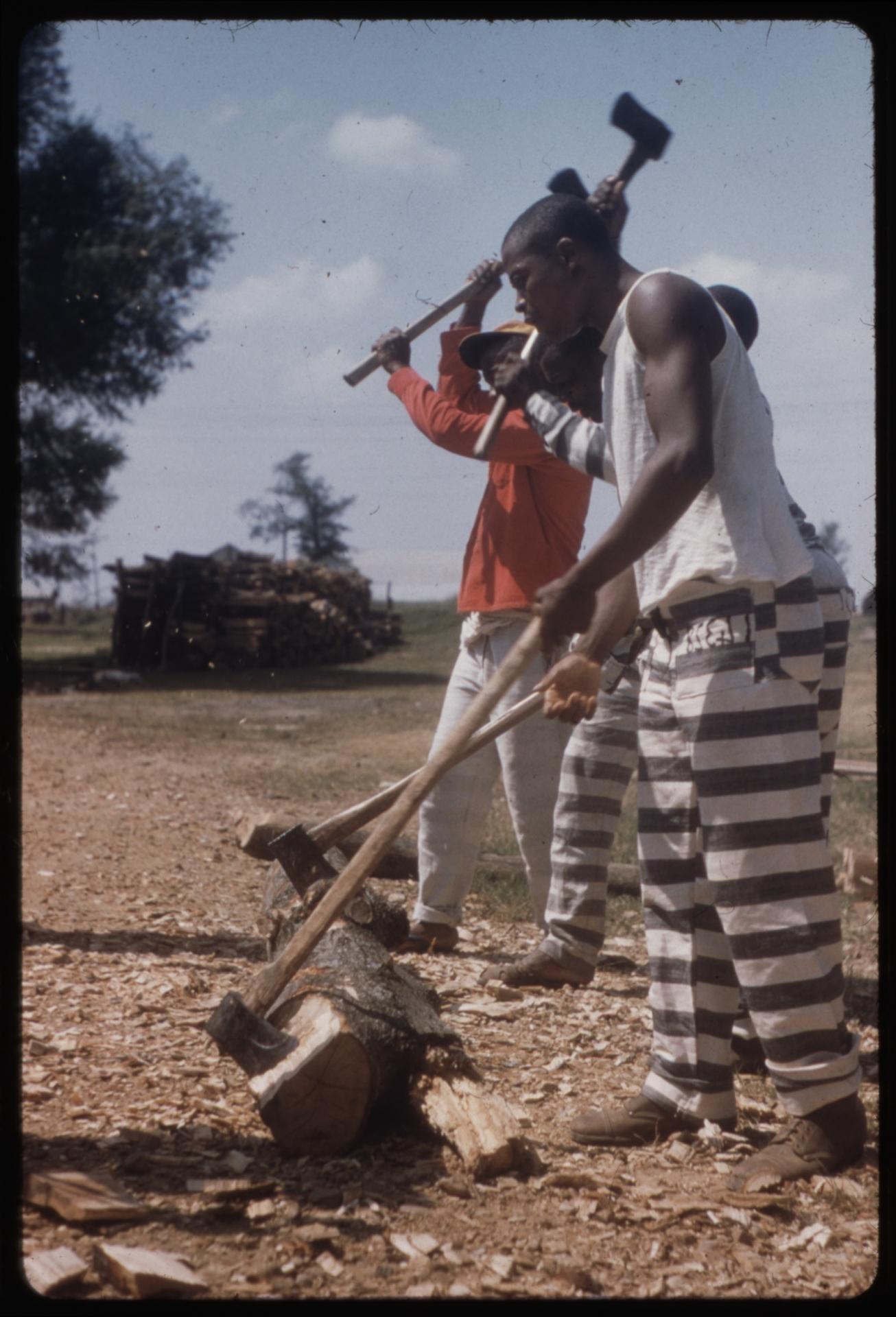 Alan Lomax, Prisoners chopping wood. Mississippi State Penitentiary (Parchman Farm) (Więźniowie rąbiący drewno. Stanowe Więzienie Mississippi (Farma Parchman), 1959, kolekcja American Folklife Center, Library of Congress. Dzięki uprzejmości the Association for Cultural Equity