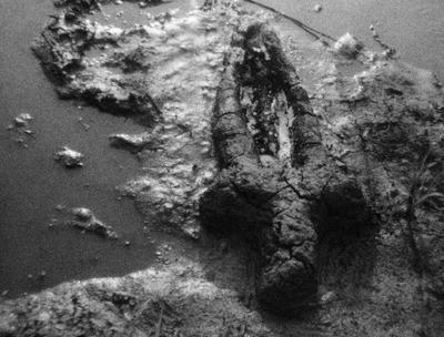 Ana Mendieta, Narodziny (Prace z prochem), 1981, film 8mm przeniesiony na HD, 2\'59\'\' © The Estate of Ana Mendieta Collection, LLC Galerie Lelong & Co., New York