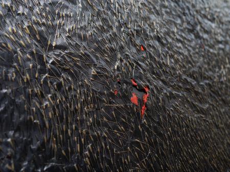 """Teresa Tyszkiewicz, """"Épingle, rouge et noir"""", 1985, szpilki, papier, akryl i olej na płótnie, 300 x 150 cm, detal, dzięki uprzejmości artystki, foto: Anna Zagrodzka"""