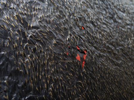 "Teresa Tyszkiewicz, ""Épingle, rouge et noir"", 1985, pins, paper, acrylic and oil on canvas, 300 x 150 cm, detail, courtesy of the artist, photo: Anna Zagrodzka"